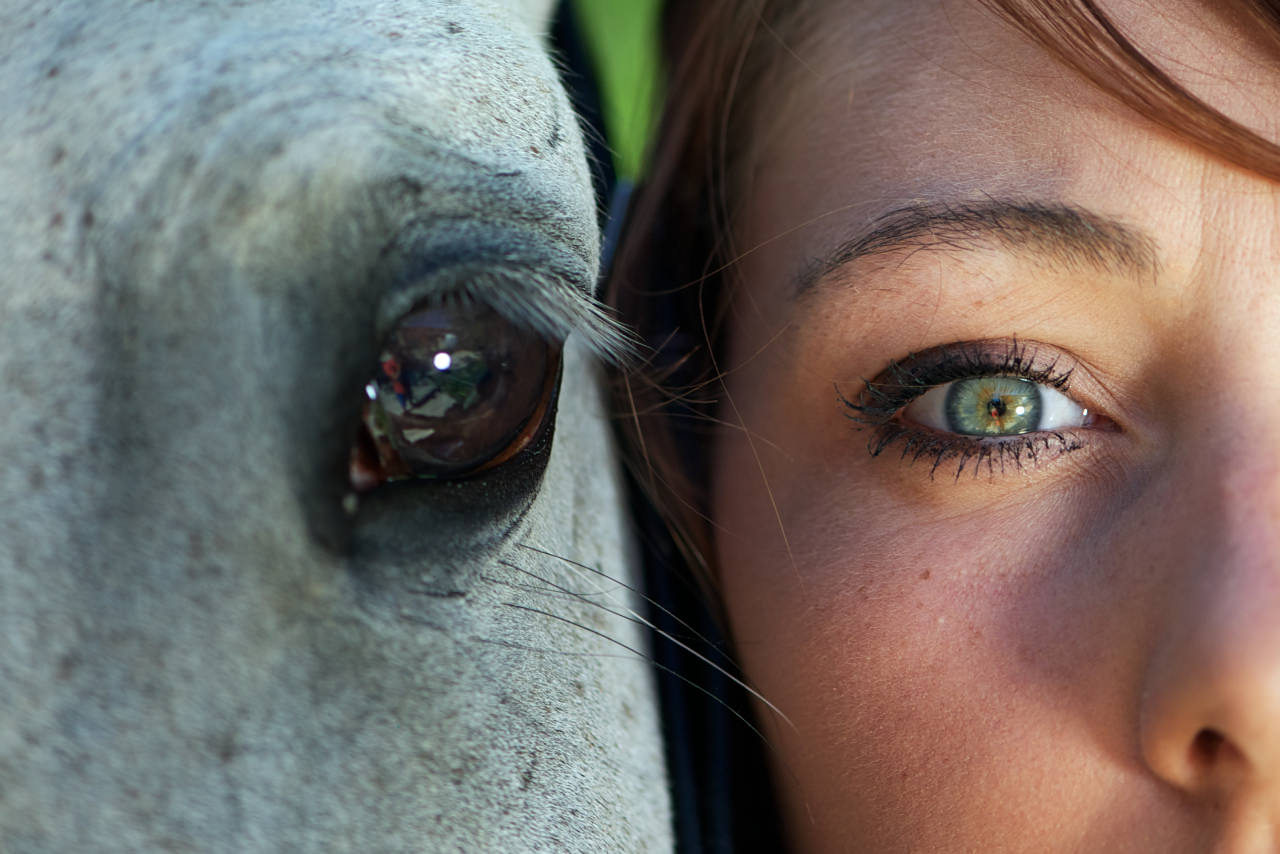 photo-yeux-chevaux
